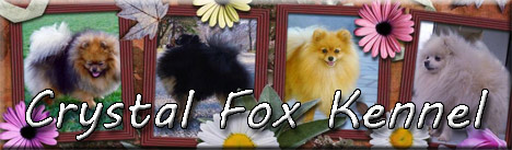 files/liebhaber/Grafiken/Zuechterbanner 468/Crystal-Fox.jpg