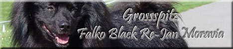 files/liebhaber/Grafiken/Zuechterbanner 468/Grossspitz-Falko-Black-Re-Jan-Moravia.jpg