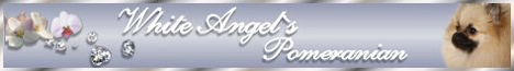 files/liebhaber/Grafiken/Zuechterbanner 468/White-Angel's.jpg